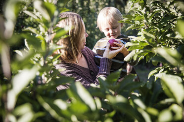 Mother showing apple to son while standing in orchard - CAVF42987