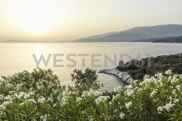 Greece, Thessalia, Lefokastro - MAMF00062
