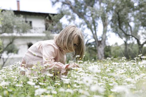 Little girl picking flowers on meadow - KMKF00199