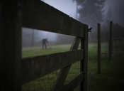 Wooden fence on grassy field during foggy weather - CAVF43560