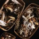 Mushrooms in baskets - CAVF43713