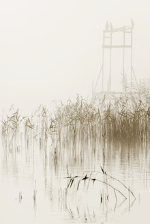 Reeds growing in foggy lake with birds in background - MASF06035