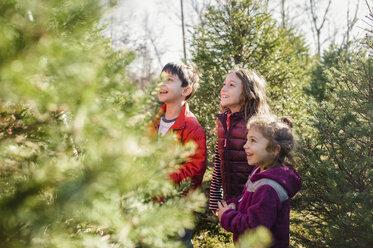 Siblings looking away while standing in park - CAVF44172