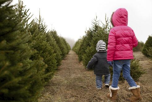 Rear view of siblings walking in Christmas tree farm against clear sky - CAVF45950