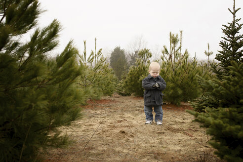 Boy standing in Christmas tree farm against clear sky - CAVF45953