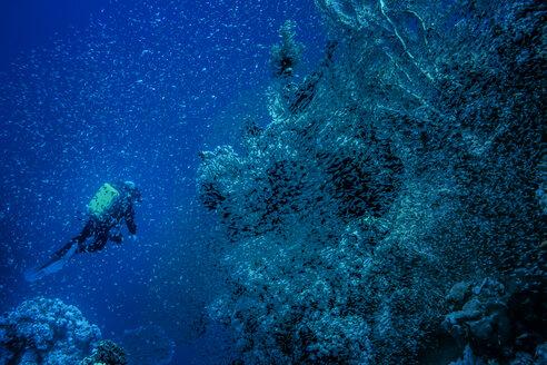Scuba diver exploring reef - CAVF46076