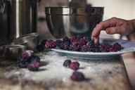 Cropped image of woman's hand in plate of fresh blackberries in kitchen - CAVF46271
