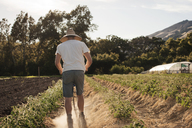 Rear view of male farmer working on field - CAVF47395