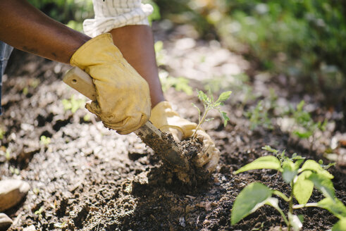 Cropped image of woman planting sapling in soil at garden - CAVF48152