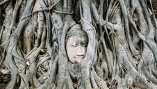Thailand, Ayutthaya, Buddha head in between tree roots at Wat Mahathat - GEMF01912
