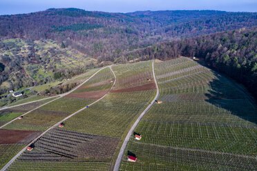 Germany, Baden-Wurttemberg, Rems Valley, Vineyards at Gundelsbach valley - STSF01505