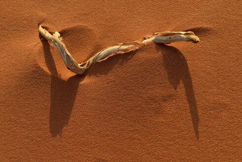 United Arab Emirates, Rub' al Khali, desert sand and dried wood - ESF01575