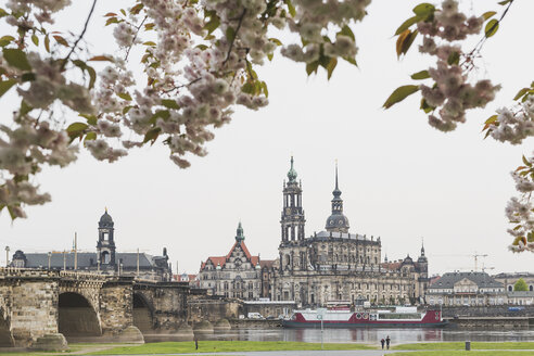 Germany, Saxony, Dresden, Augustus Bridge, Dresden Cathedral, banks of the Elbe, almond blossoms - ASCF00851