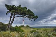 Germany, Mecklenburg-Western Pomerania, Hiddensee Island, Dornbusch Lighthouse and pine tree with cloudy sky - RUEF01870