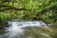 New Zealand, South Island, Catlins, Purakaunui Falls - RUEF01873