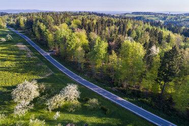 Germany, Baden-Wuerttemberg, Swabian Alb, Fils Valley, spring in Schurwald - STS01513