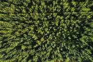 Germany, Baden-Wuerttemberg, Swabian Alb, Aerial view of Schurwald in spring - STSF01516