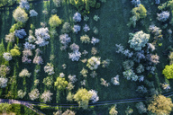 Germany, Baden-Wuerttemberg, Rems Valley, Aerial view of meadow with scattered fruit trees in spring - STSF01519