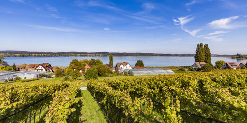 Germany, Oberzell, view to Lake Constance with vineyards in the foreground - WD04634