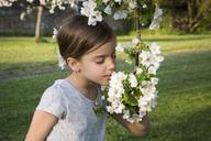 Little girl smelling apple blossom - LVF06927