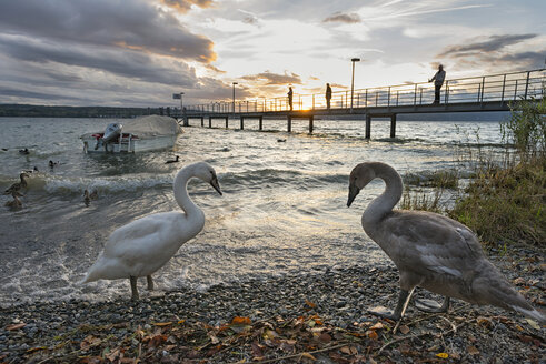 Germany, Baden-Wuerttemberg, Lake Constance, Ueberlingen, jetty and swans - SH02048