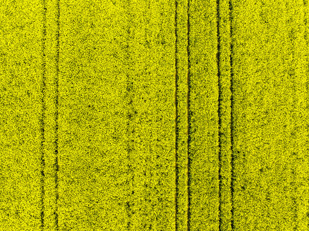 Germany, Hesse, Wetterau, flowering rape field - AMF05703