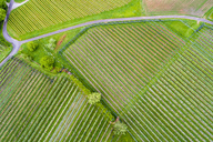 Germany, aerial view of plantation with apple trees in spring - STSF01528