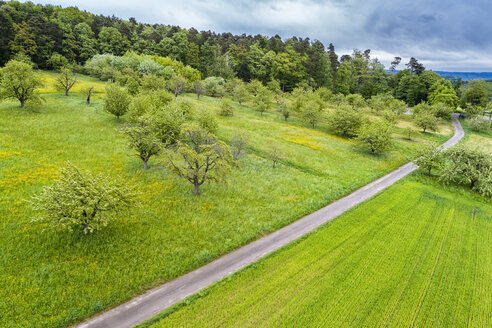 Germany, Baden-Wuerttemberg, Swabian Franconian forest, Rems-Murr-Kreis, Aerial view of meadow with scattered fruit trees and road - STSF01531