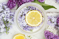 Homemade lilac sirup, slice of lemon, lilac blossoms in glass - LVF06942