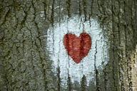 Heart painted on tree trunk - ZEDF01406