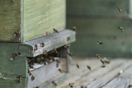 Germany, organic farm, bees flying at beehive - CHPF00458