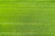 Germany, Baden-Wuerttemberg, Rems-Murr-Kreis, Aerial view of green field in spring - STSF01533