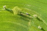 Germany, Baden-Wuerttemberg, Rems-Murr-Kreis, Aerial view of green field in spring - STSF01536