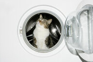Cat in a washing machine - ISF00394