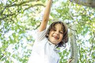 Boy climbing a tree - CUF01896