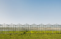 Greenhouse in Westland,  area with the highest concentration of greenhouses in Netherlands - CUF02329