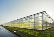 Greenhouse in Westland,  area with the highest concentration of greenhouses in Netherlands - CUF02332