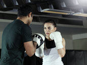 Boxer training in gym - CUF03142