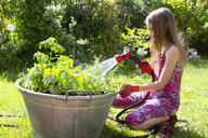 Girl using garden hose for watering planted herbs in zinc tub in the garden - SARF03736