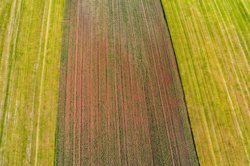 Germany, Baden-Wuerttemberg, Rems-Murr-Kreis, Aerial view of fields - STSF01555