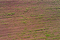 Germany, Baden-Wuerttemberg, Rems-Murr-Kreis, Aerial view of field with plants - STSF01558