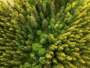 Germany, Bavaria, Aerial view of forest - JUNF01038