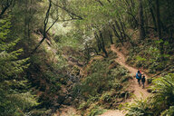 Family walking in forest, Fairfax, California, USA, North America - CUF07264