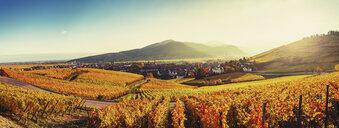 Panoramic landscape with autumn coloured vines, Turckheim, Alsace, France - CUF07563