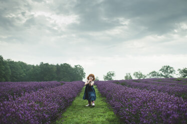 Toddler between rows of lavender, Campbellcroft, Canada - CUF07710