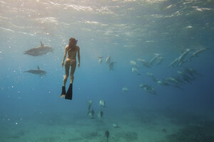 Underwater view of woman snorkeling with sea life, Oahu, Hawaii, USA - ISF01492
