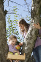 Two young girls picking apples from tree - CUF08423