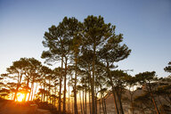 Africa, South Africa, Cape Town, Trees on a hilltop with sunset - ZEF15426