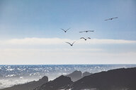 Africa, South Africa, Cape Town, Flock of birds flying over the sea and rocks - ZEF15496