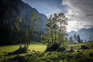 Germany, Bavaria, Berchtesgaden Alps, trees and meadow against the sun - HAMF00298